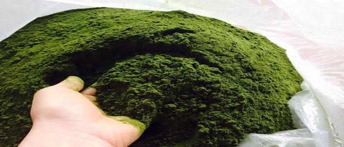 Tư vấn về công bố chất lượng bột trà xanh