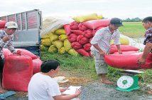 Làm thế nào khi bị xù nợ ký gửi nông sản?